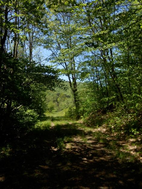 bear creek mt trail