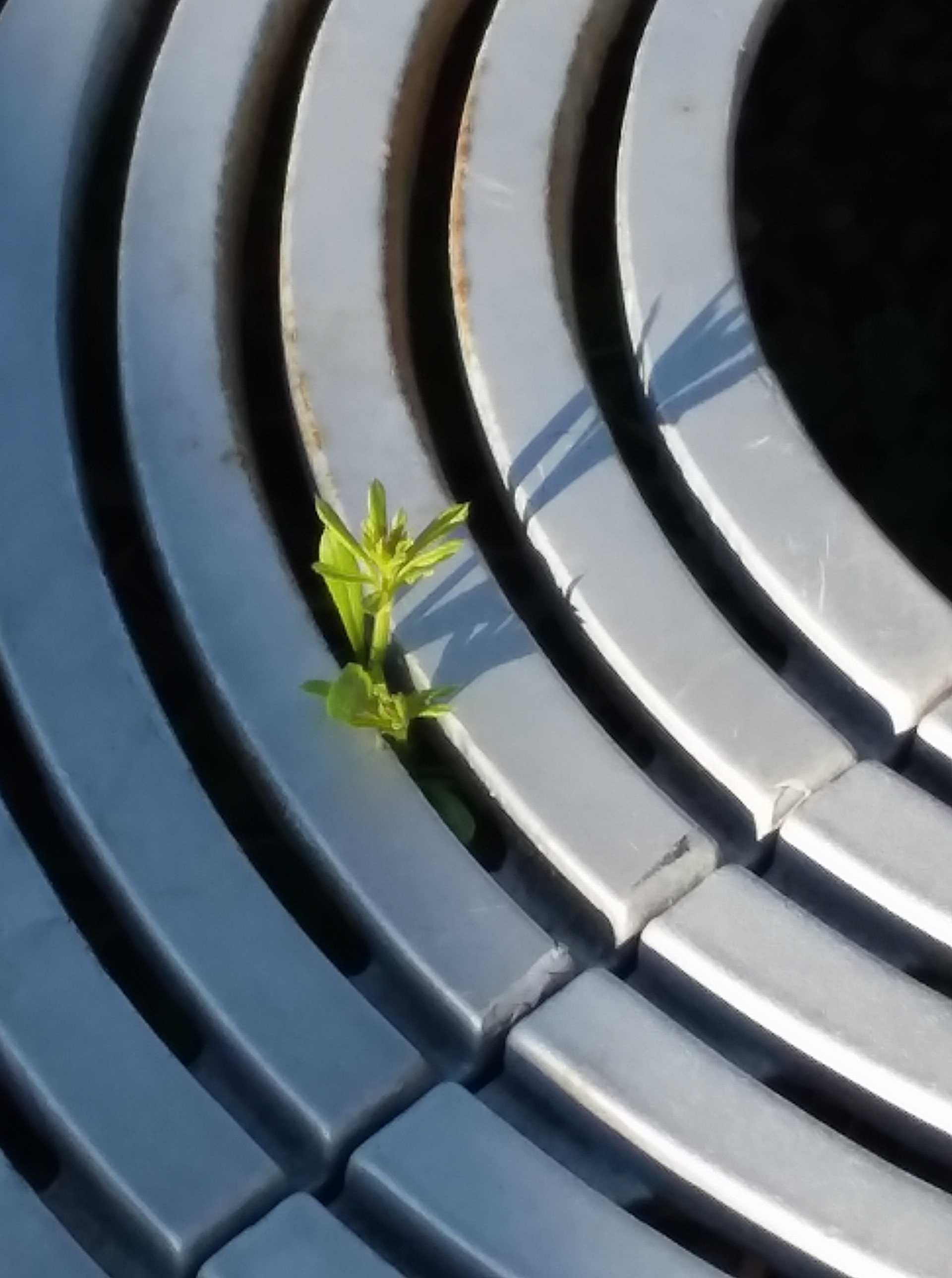 brave little plant